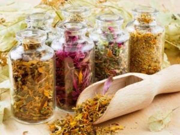 Очищение организма лекарственными травами: рецепты сборов, правила прием