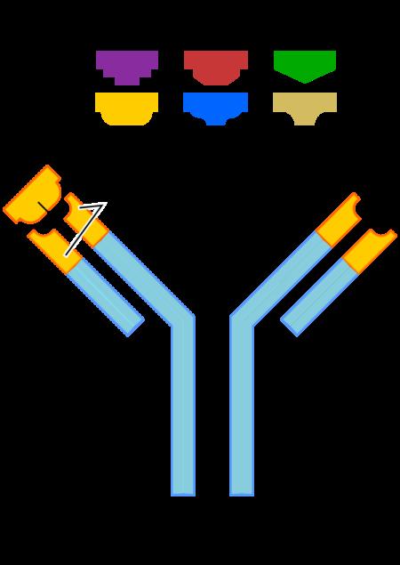 Значение тромбофилии в анализах крови при беременности, риски и осложнения данного состояния