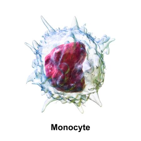 Из-за каких факторов может происходить снижение показателей моноцитов в крови?