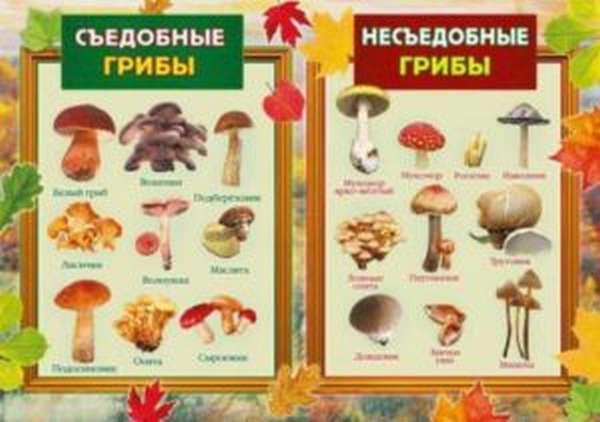 Съедобные и не съедобные грибы
