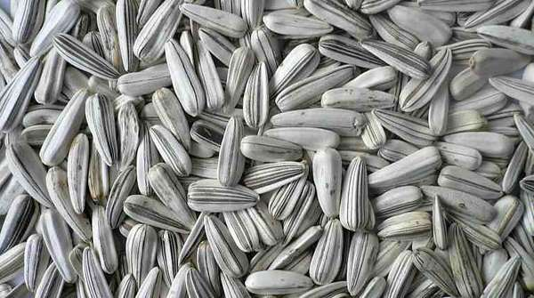 Белые семена подсолнуха