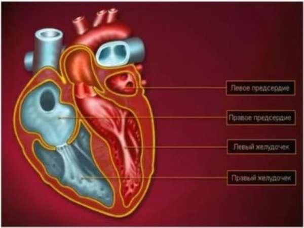 Характеристика инфаркта правого желудочка, причины болезни и методы терапии и профилактики