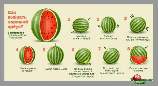 Как выбирают арбуз