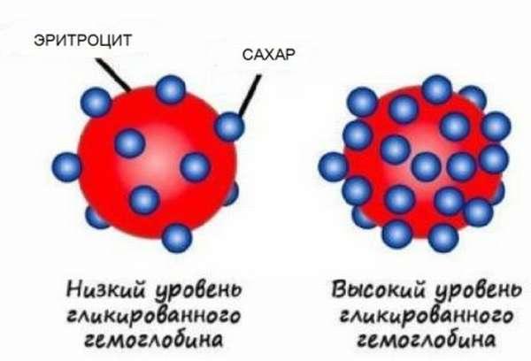 Повышение и понижение гликозилированного гемоглобина, назначение анализа и его расшифровка