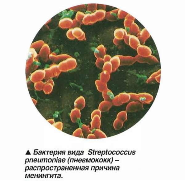 Какой должна быть норма СРБ в биохимическом анализе крови человека?