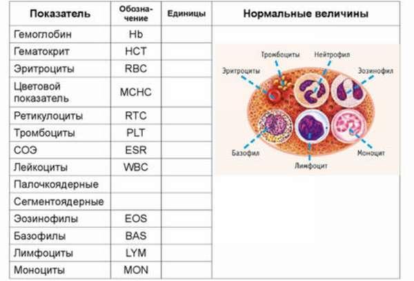 Как в анализах крови обозначаются лейкоциты, разновидности клеток, методы определения