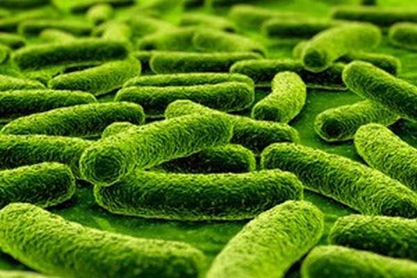 Пробиотики при лечении антибиотиками