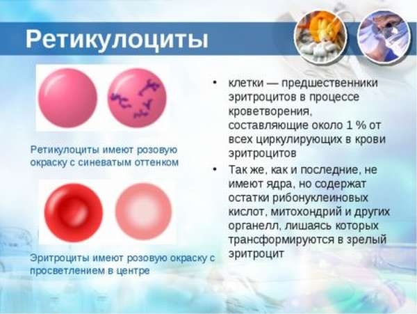 Причины повышения ретикулоцитов, как определить функциональности кровеобразующей системы?