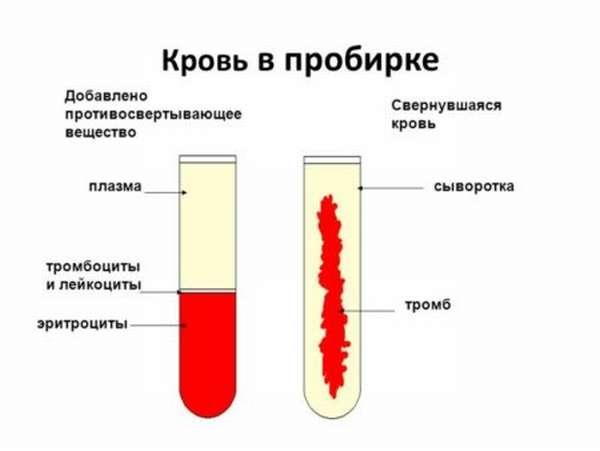 В чем особенность сыворотки крови и ее отличия от плазмы крови?