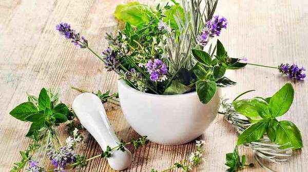 Травы для лечения болезней печени у детей
