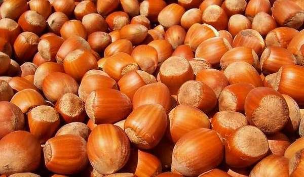 Лесные орехи богаты витамином e