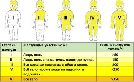 Показания к проведению анализа крови на билирубин, нормы и отклонения
