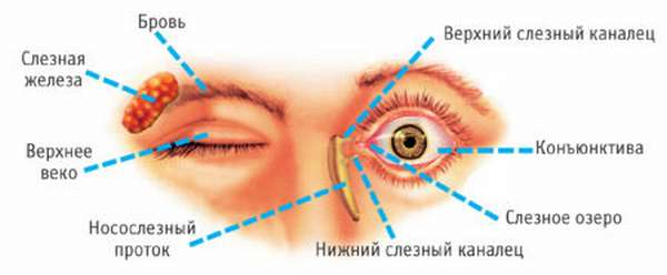 Влияние приступов ВСД на зрение пациентов, причины нарушений, методы лечения и профилактики