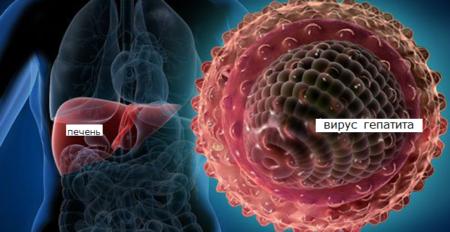 Понятие ферментов плазмы крови и их роль в жизнедеятельности человека
