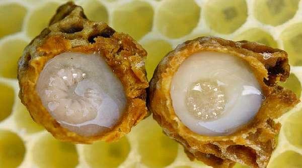 Пчелиное маточное молочко в сотах