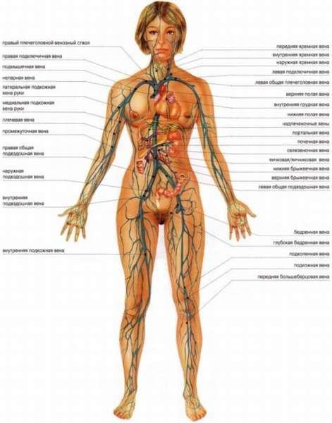 Всегда ли появление неприятных ощущений в области сердца свидетельствует о патологии этого органа?