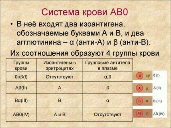 Выявление группы крови и резус-фактора: какой будет кровь у ребенка, таблица, калькулятор для определения данных показателей
