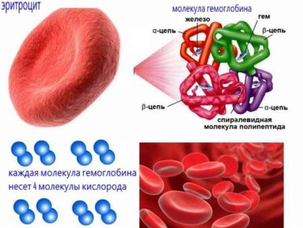 О чем говорит уровень гемоглобина 100 г/л, установленные нормы и отклонения