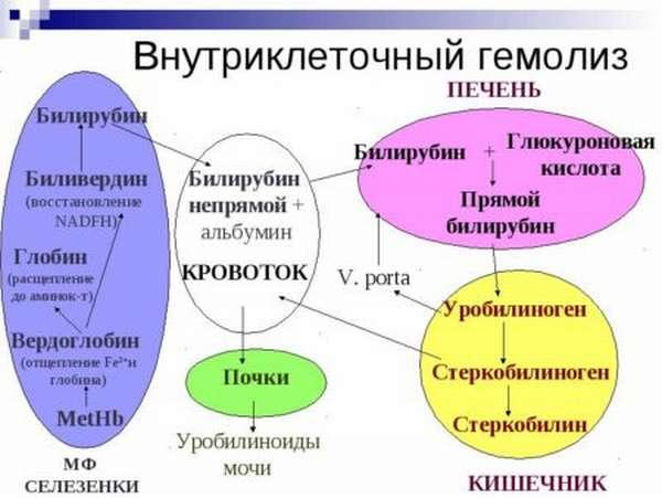 Причины гемолиза эритроцитов, разновидности, симптоматика и терапия