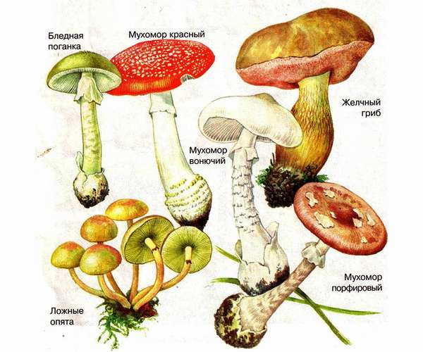 Отравление грибами симптомы, лечение, профилактика
