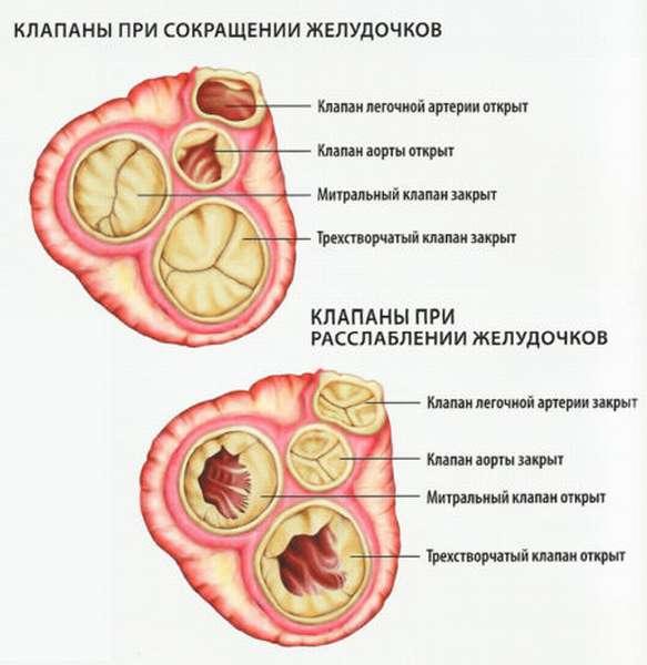 Понятие регургитации: что это такое в области кардиологии? Методы диагностики и оценка рисков для здоровья
