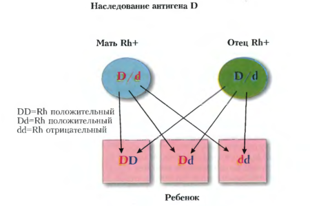 Определение совместимости групп крови для зачатия ребенка, таблица для определения данного показателя, возможные риски при несовместимости