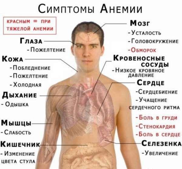 Почему показатели гемоглобина падают до критических отметок в 60 г/л, и как поднять железо?