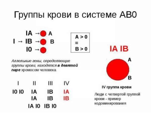 Классификация групп крови: какие бывают виды? Резус-фактор и что он означает?