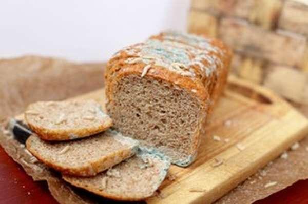 Плесень на хлебе: что будет, если съесть заплесневелый продукт, как лечить такое отравление и как не допустить появления плесневого грибка