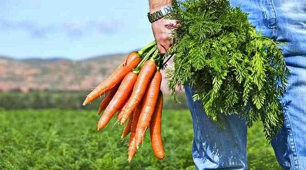 Мужчина с морковью
