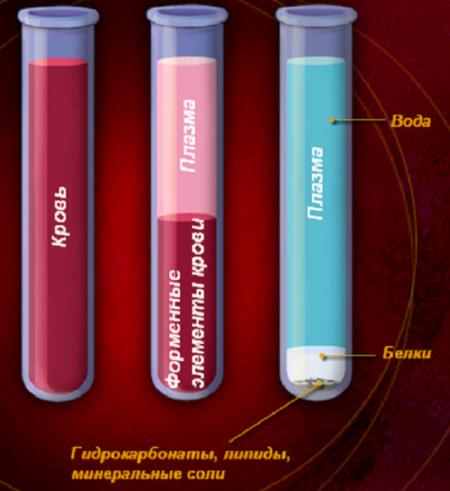 Польза или вред от сдачи плазмы крови: мнения специалистов и факты