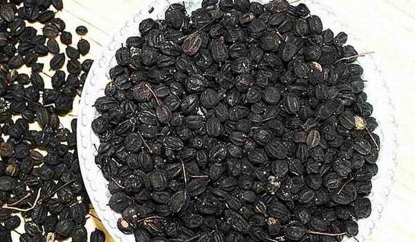 Размножение элеутерококка семенами