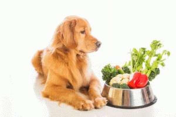 Что нельзя собаке после отравления