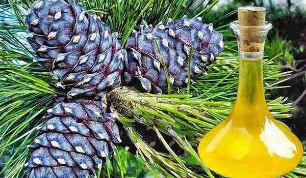 Полезные свойства масла кедровых орехов