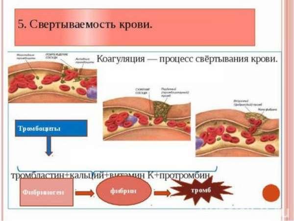 Какими продуктами можно повысить свертываемость крови, и что стоит исключить из рациона?