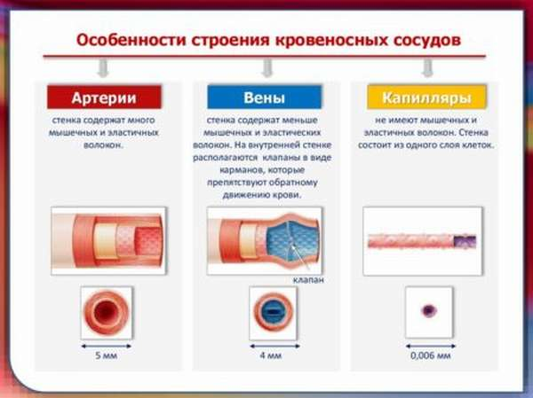Что надо знать о микроваскулярной стенокардии людям среднего возраста и старше
