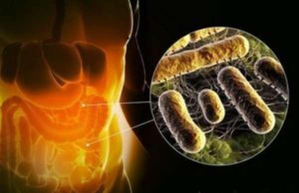 Бактерии, вызывающие сальмонеллёз
