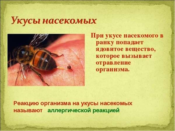 Укусы животных и насекомых: первая помощь, последствия