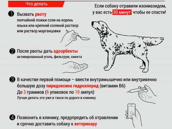 Отравление у собак: симптомы, помощь и лечение