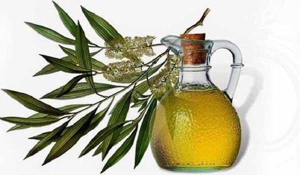 Польза эфирного масла чайного дерева