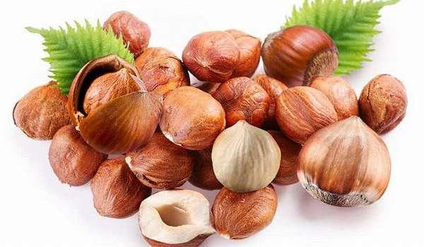 Фундук – ореховый король