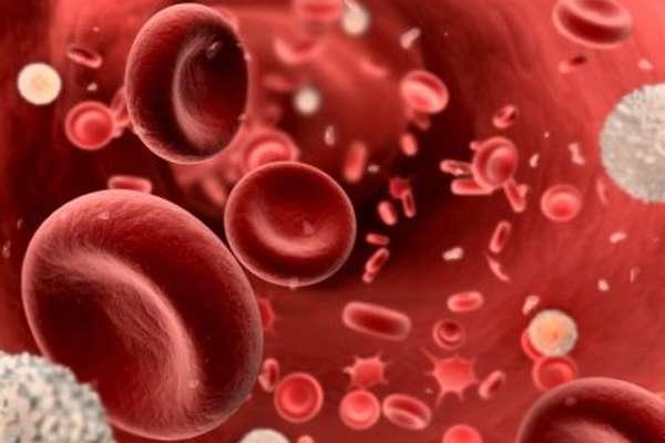 Что означают показатели mcv в анализах крови, расшифровка и причины отклонений