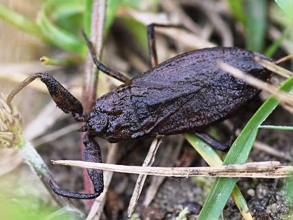 Смертелен ли укус скорпиона?