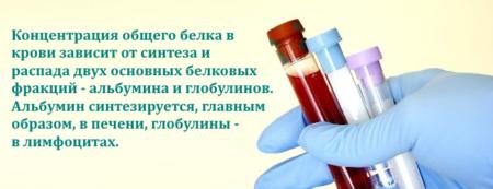 Анализ на определение общего белка в крови, нормы у женщин, причины отклонений