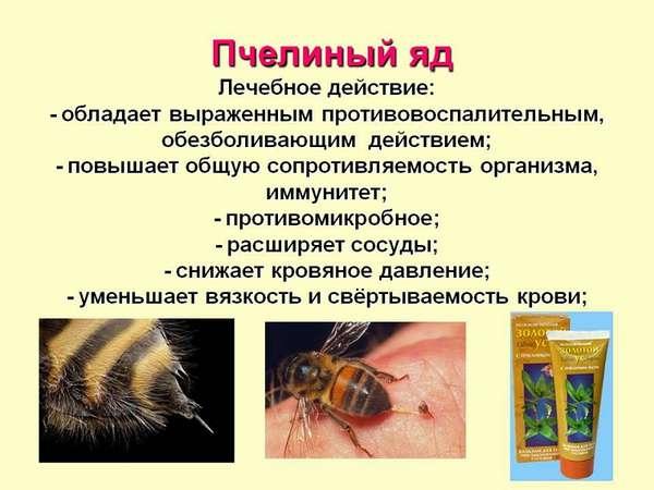 Положительно воздействие пчелиного яда