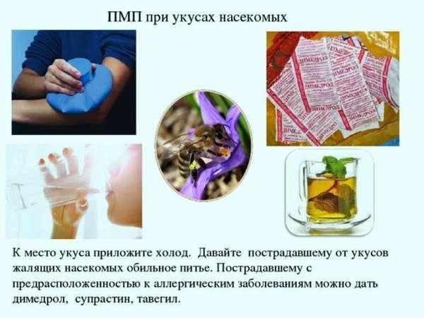 Последствия укуса шершня: симптомы, первая помощь