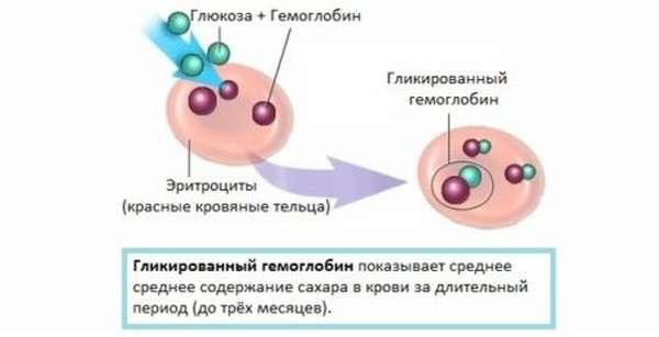 Уровень гемоглобина: норма у женщин по возрасту в таблице