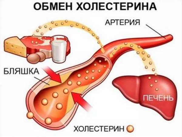 Что надо знать о содержании холестерина в креветках?