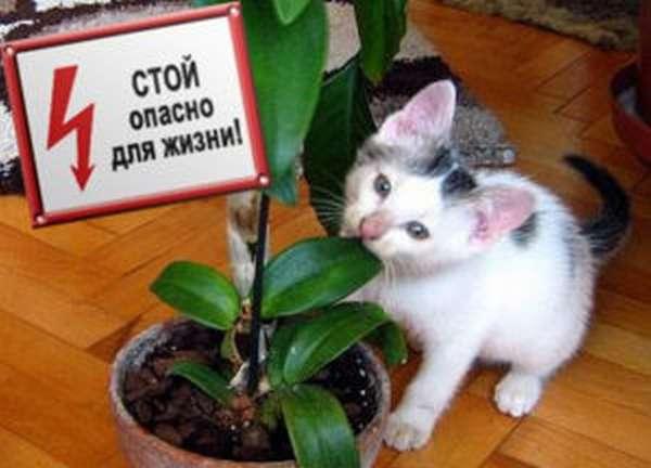 Котёнок может отравиться комнатными растениями
