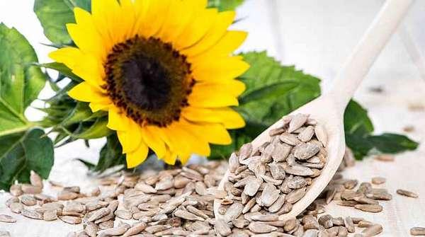 Очищенные семена подсолнечника